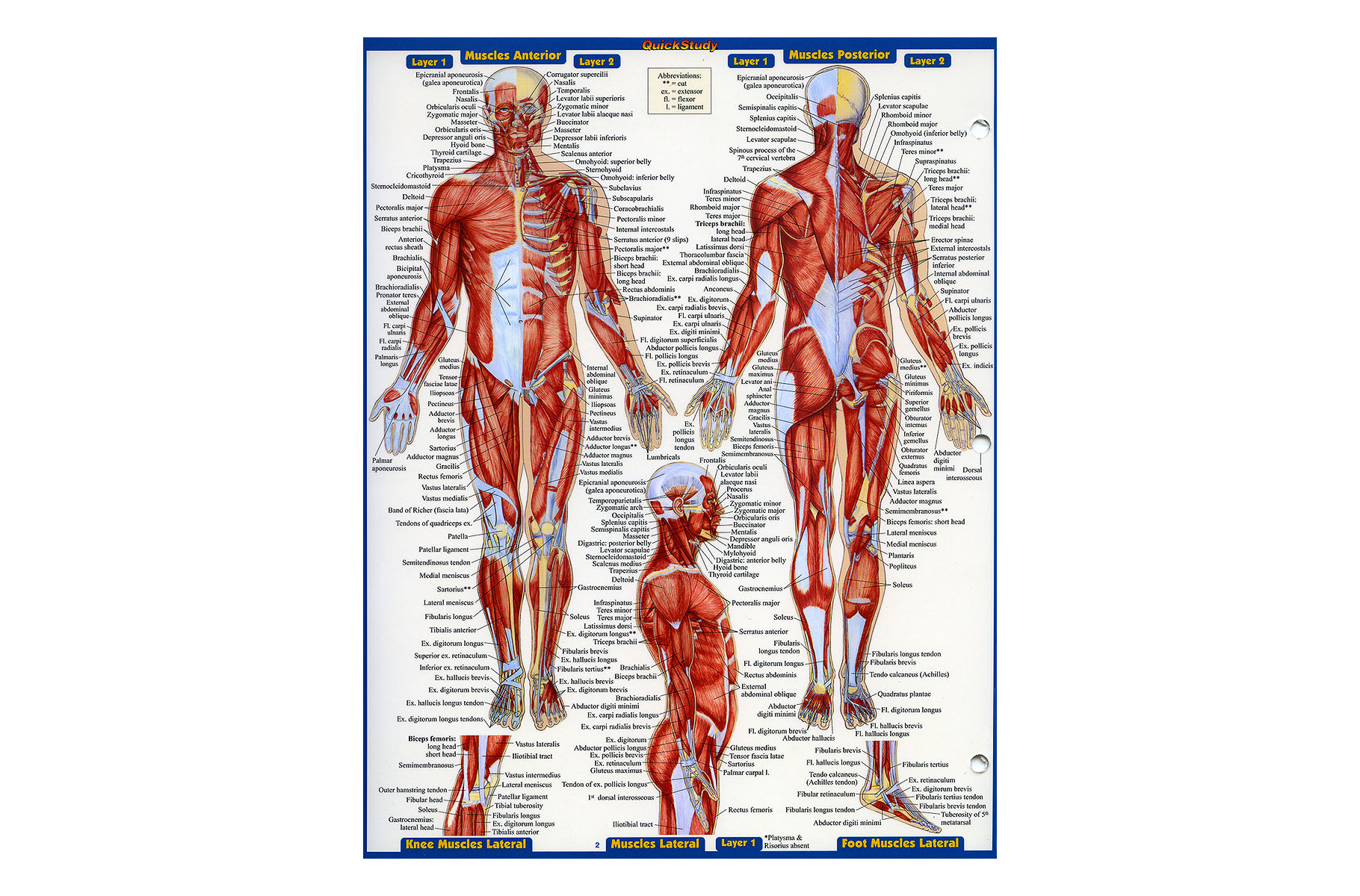 Anatomy Quick Study Reference Guide Biogeometry Europe