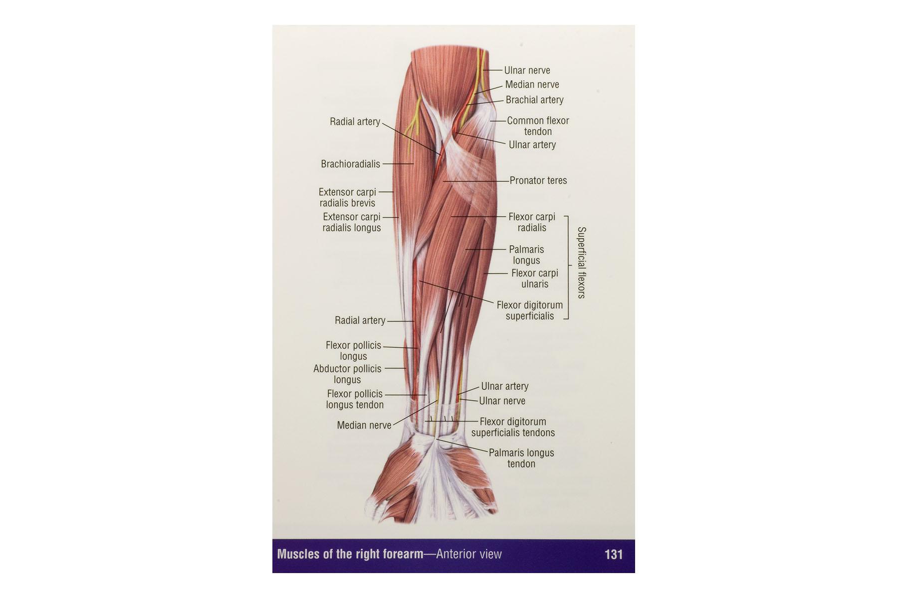 Anatomy & Physiology Pocket book - BioGeometry Europe